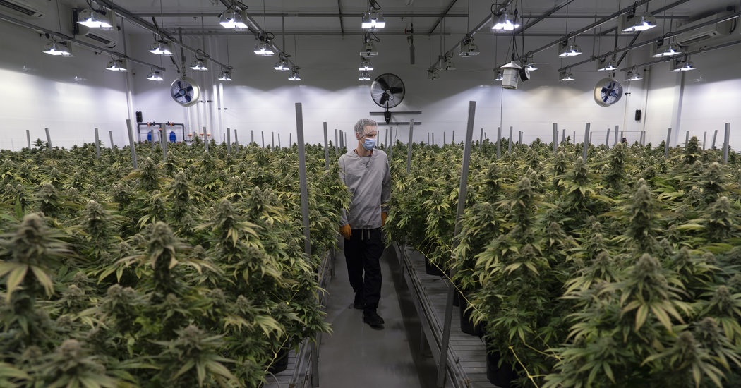 Legal Marijuana's Unresolved Issues a Year On